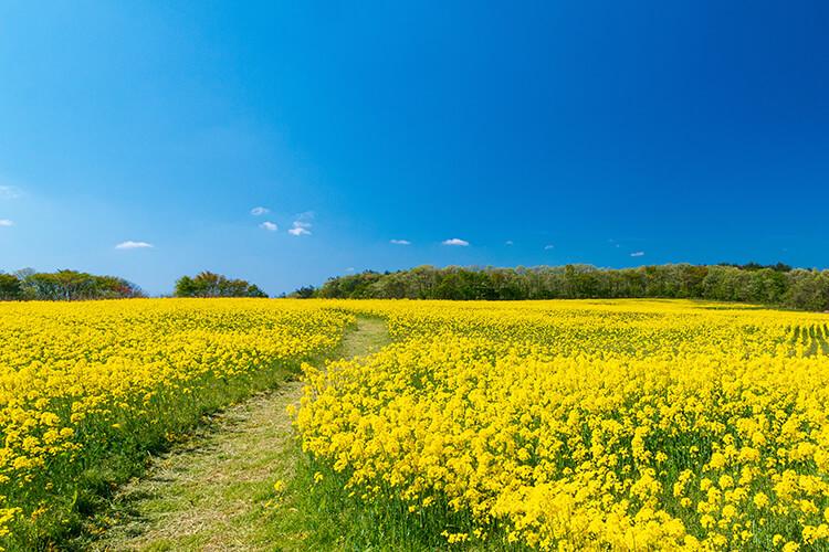 Photo of flower field