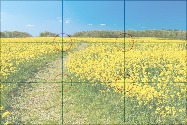 삼등분 법칙 구도에 거둔 꽃밭 사진