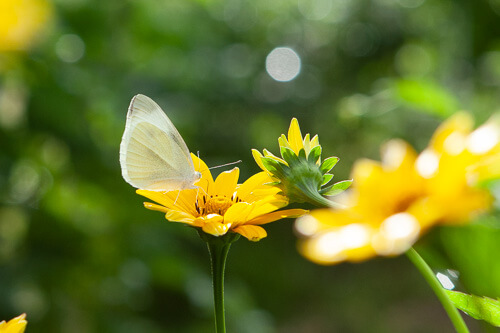 Butterflies and flowers pictures