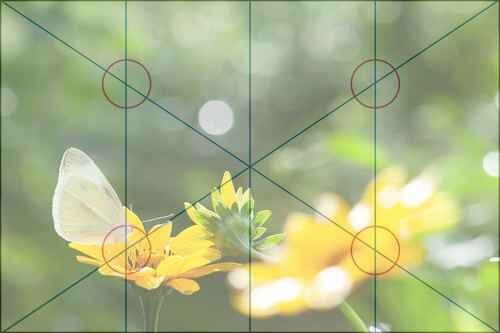 Photograph of a flower in the composition of the quadrant method